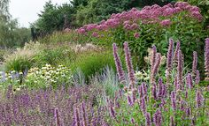 Herbaceous border: Easy herbaceous border to the sandy soil and full sun .... tolerates wind