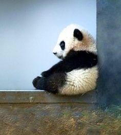 Lil Panda ☺