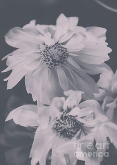 Floral Black White 2 by Andrea Anderegg More here: http://andrea-anderegg.pixels.com #floral #wallart #homedecor #photography