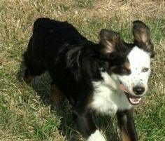 Strider loves to run!