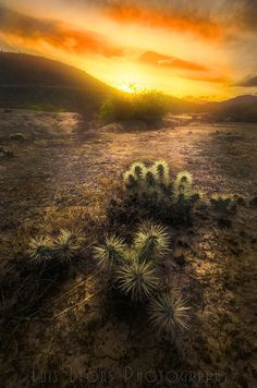 Tencholotes at Sunset - )