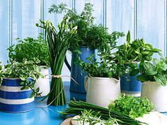 Spring Herbs By The Brides Diary DIY