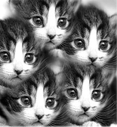 Should I send these to your house, Kim?  Your 4 older cats need someone to look after lol!