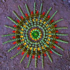 Arizona artist Kathy