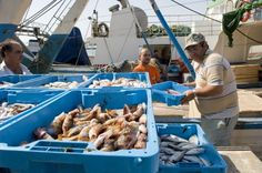 13a Mostra de cuina marinera de Villajoyosa    14 restaurantes participarán en la XIII Mostra de Cuina Marinera de La Vila Joiosa del 5 al 14 de abril  Los productos del mar como protagonistas.     www.lavilagastronomica.com