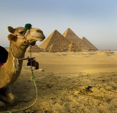 Pyramids of Giza, Egypt, Africa--the oldest & only remaining ancient wonder of the world
