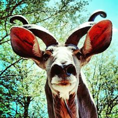 Kudu @ honeybadgersafarihouse. Photo by Jonathan Couzens