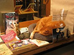 Cat in bookstore window.