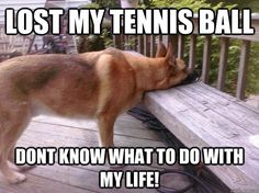 GSD life problems. If this is your dog, give one of these replacements a try! We bet your dog will love them!