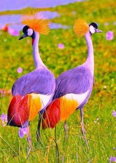 Take a break and go through these 26 cute animals boost your mental focus. These cute animals pictures are so heart touching and feel relaxed everyone. Cute Birds, Pretty Birds, Exotic Birds, Colorful Birds, Tropical Birds, Beautiful Creatures, Animals Beautiful, Animals Crossing, Animals And Pets