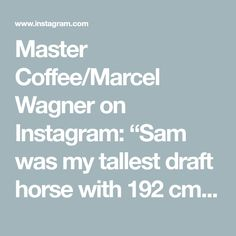 "Master Coffee/Marcel Wagner on Instagram: ""Sam was my tallest draft horse with 192 cm. Painted with coffee #horse #horselove #horselover #shirehorse #drafthorse #coffee #coffeeart…"" Shire Horse, Draft Horses, Horse Love, Coffee Art, Marcel, Painting, Instagram, Painting Art, Coffee Decorations"