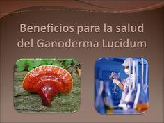 Beneficios Para La Salud Del Ganoderma Lucidum Anorexia, Diabetes, Lunch Box, Health, Food, Bento Box