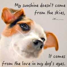Learn with dogs and humans who know their stuff. I Love Dogs, Puppy Love, Cute Dogs, Jack Russell Dogs, Jack Russell Terrier, Dog Quotes, Animal Quotes, Amelie, Rat Terriers