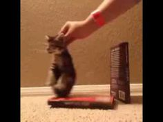 Wrecking ball kitten edition - VINE - YouTube