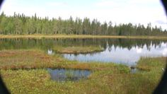 "Lohilampi - ""the salmon pond"". Deep in the forests of Hyrynsalmi. Lots of salmon to catch!"