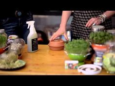 Learning How To Sprout and Micro Green - YouTube