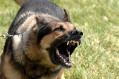 How To Quickly Stop Dog Barking | Veterinary Secrets Blog with Dr. Andrew Jones, DVM