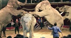 Spaß im Zirkus - ohne Wildtiere!