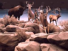 Family Fun in the St. George Utah and Zion National Park Utah area. St George Utah, Saint George, Zion National Park, National Parks, Fun Activities To Do, Future Travel, Gypsy Soul, Summer 2015, Day Trips