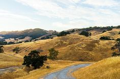 Golden California Hills by Priya Ghose