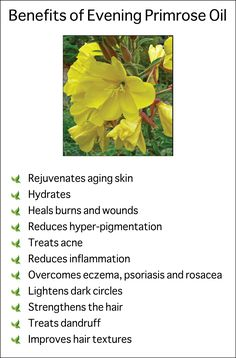 Benefits of Evening Primrose Oil.  We use this lovely carrier oil in our facial…