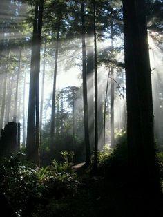 Tilamook national forest in Oregon
