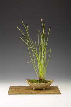 Um elemento de grande simplicidade e belezae fundamental na apresentação dos bonsais no tokonoma,é o kusanomo. Estas ervas, flores, plantas rasteiras e até musgos são plantadas em pequenos vasos,…