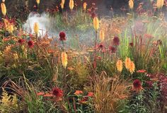 Good strong colours work well in our Australian light. Great to see Kniphofia being used.