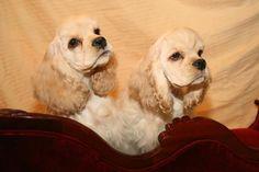 CRESCENTMOON Cocker Spaniels - Gary & Pamela Fuller of Indiana 765-459-9325 Quality Cocker Breeder