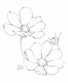flower art Flower drawings of cosmos flowers by Ka - Drawing Sketches, Art Sketches, Art Drawings, Drawing Tips, Sketching, Drawings Of Plants, Drawing Ideas, Flower Sketches, Flower Drawings