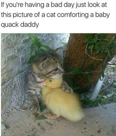 We love animals. Cute and funny animal pictures and gifs Cute Funny Animals, Cute Baby Animals, Animals And Pets, Funny Cats, Animals Photos, Cute Kittens, Cats And Kittens, Cute Animal Pictures, Funny Pictures