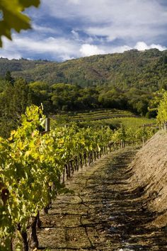 Benziger Winery, great Certified Sustainable and Certified Biodynamic wine from California.