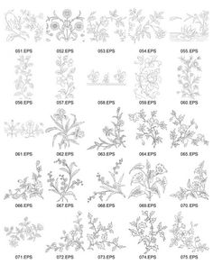 Flowers vector line drawing of plant capacity figure -3