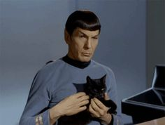Spock, stroking a cat. Generally, I hate animated gifs, but I find this strangely soothing. (click through for the full effect.)