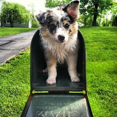 Here's 12 Puppies In Mailboxes That'll Absolutely Make Your Day
