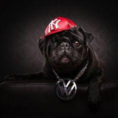 The_Pug_Life_Adorable_Portraits_Of_Lovable_Pugs_Dressed_As_Hip_Hop_Artists_2015_10