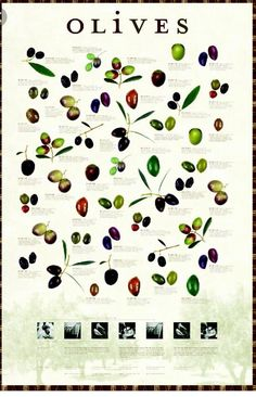 types of olives Types Of Olives, Olive Oil Packaging, Liquid Gold, Olive Tree, Edible Flowers, Fruits And Veggies, Gourmet Recipes, Olive Oils, How To Make