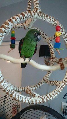 30 Best Of Diy Parakeet toys Ideas Diy Parrot Toys, Diy Bird Toys, Bird Crafts, Parrot Perch Diy, Parrot Fish, Homemade Bird Toys, Homemade Art, Best Pet Birds, Parakeet Toys