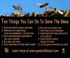 Good to know! I love bees and honey. Kinda want to try beekeeping one day. Bee Friendly Flowers, Raising Bees, I Love Bees, Save Our Earth, Bee Happy, Save The Bees, Busy Bee, Bees Knees, Queen Bees