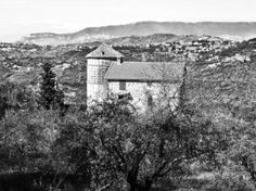 Laureana Cilento farm between trees