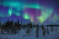 Northern lights above a sparse boreal forest in Churchill, Manitoba, Canada. By David Marx.