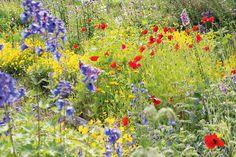 Luo istutuksiin harmoniaa yhdistelemällä lähivärejä. Sykettä ja kontrastia saat yhdistelemällä... Bird, Deco, Garden, Painting, Animals, Outdoor, Outdoors, Garten, Animales