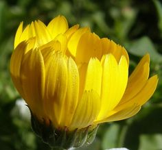 263 best yellow flowers images on pinterest yellow flowers color photography flowers macro photography yellow flowers sunshine flower photography mightylinksfo