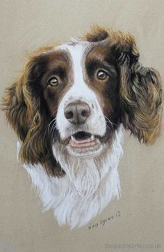 Pastel dog portraits by Nina Squire, the pastel artist, pet portraits in Dorset and the South West Chien Springer, Springer Spaniel, Pastel Portraits, Dog Portraits, Pastel Drawing, Pastel Art, Animal Paintings, Animal Drawings, Pet Drawings
