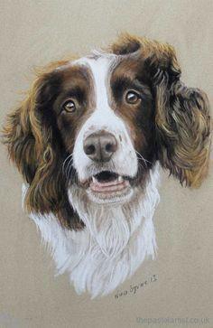 Working spaniel pastel portrait