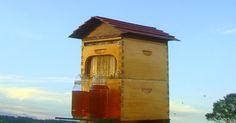 Flujo colmena: miel de barril directamente desde su colmena