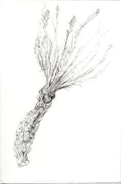 249 Seed Bank, Dandelion, Seeds, Drawings, Flowers, Plants, Natural Forms, Studio, Dandelions