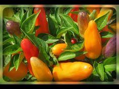 Stuffed Peppers, Vegetables, Friends, Videos, Youtube, Amigos, Stuffed Pepper, Veggies, Veggie Food
