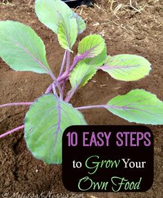 10 Easy Steps to Grow Your Own Food Learn to grow you own food, perfect for a first time garden and pros alike.