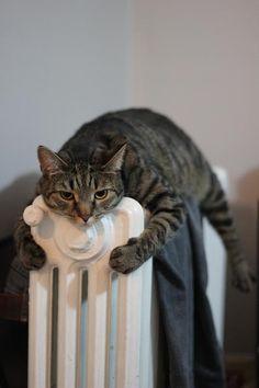 I hugs my heater